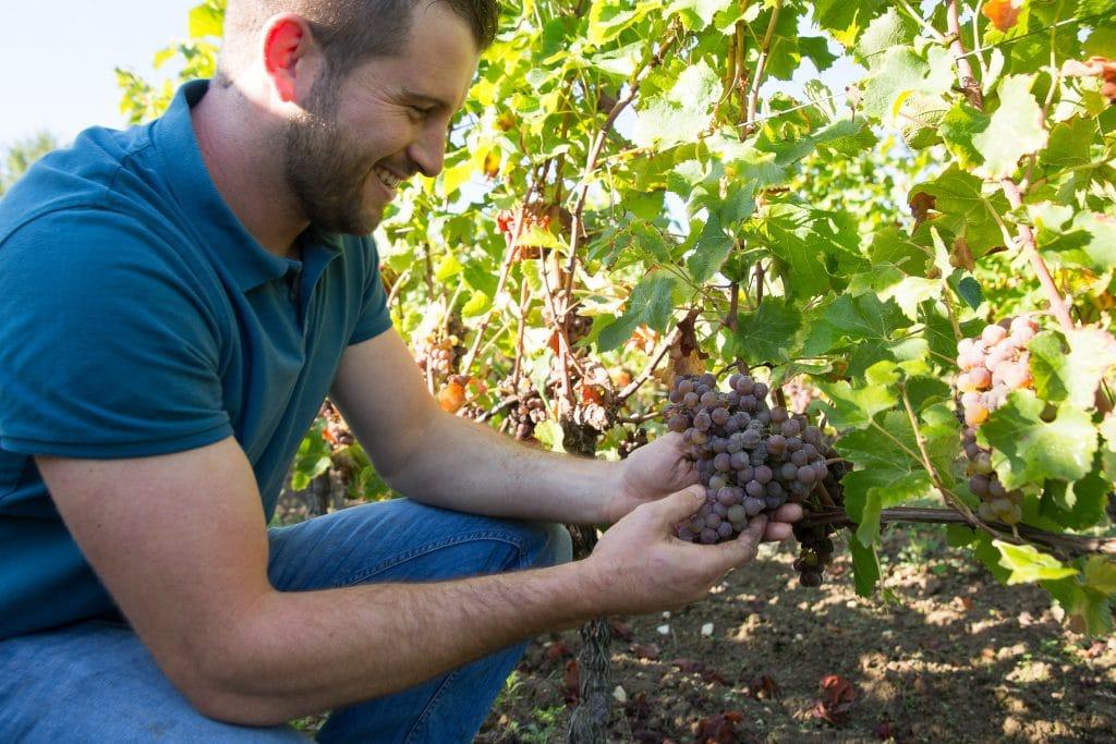 Guillaume borderie et une grappe de raisin
