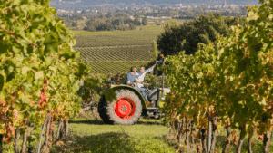 Vignoble le Rauly – De la vigne au e-commerce